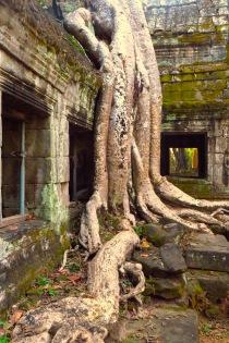 Ta Prohm Tempel, Kambodscha
